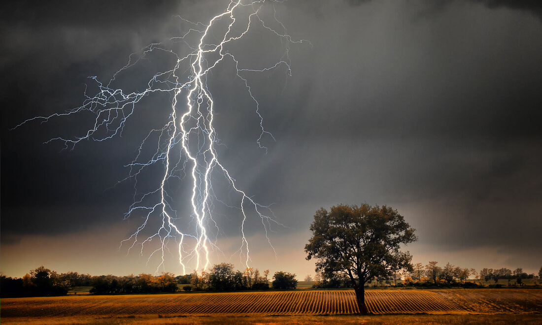 One tree in a field with lightning in the distance
